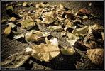 [+] Увеличить - Падшие листья
