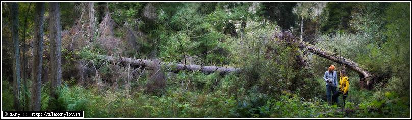 Две девицы в дремучем лесу