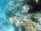 [+] Увеличить - Коралловый риф