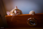 Посмотреть все фотографии серии Житие котовье в условиях ремонта