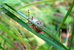 Посмотреть все фотографии серии Пчелы, мухи и прочие членистоногие ....