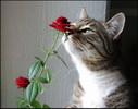 [+] Увеличить - Прикольный влюбленный кот