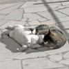 [+] Увеличить - Кошачья ласка