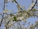 [+] Увеличить - Весна пришла!