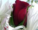 [+] Увеличить - Цветок