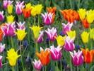 [+] Увеличить - Цветы