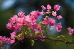 [+] Увеличить - Весеннее цветение