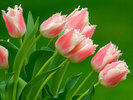 [+] Увеличить - Красивые цветы