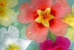 [+] Увеличить - Радуга цветов