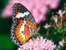 [+] Увеличить - Красивая бабочка