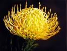 [+] Увеличить - Необычный цветок