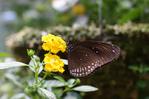 [+] Увеличить - Бабочка и цветок