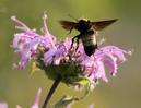 [+] Увеличить - Пчелка