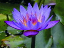 Посмотреть все фотографии серии Красота в цветении
