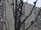 [+] Увеличить - Антикризисный раек Новый Год 2010 Фото с сайта zaitsev.cn Дмитрий Зайцев