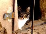 Кот в underground'е