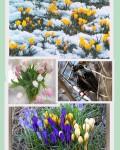 """Коллаж """" Весна"""""""