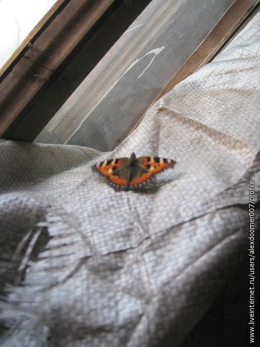 19.Жилище бабочек...