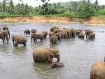 питомник слонов