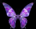 Бабочка на черном: предпросмотр.