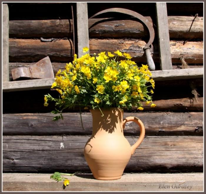 Лютики цветочки...