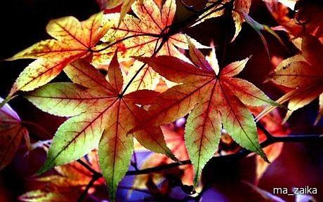 Осенние цветы в национальном
