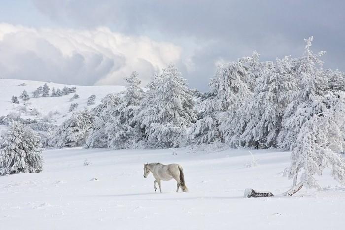 Зимние фото-пейзажи.  NINA_253.  Цитата сообщения. http...