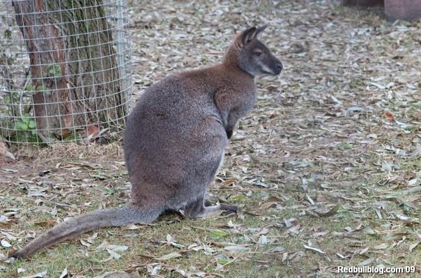 Блин, нет, всё таки не Австралия...в Австралии вроде бы не холодно...опять туристическая компания обманула!