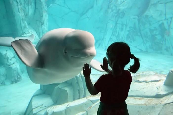 Подводный мир under sea художник david miller