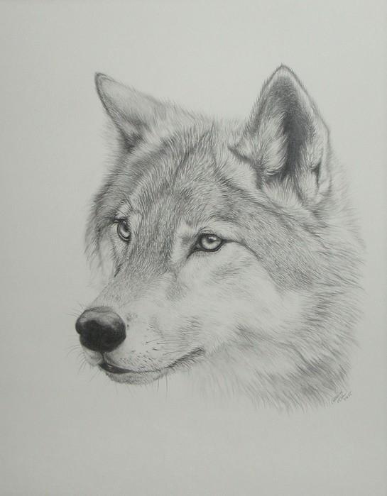 Нарисовать сову поэтапно карандашом картинки