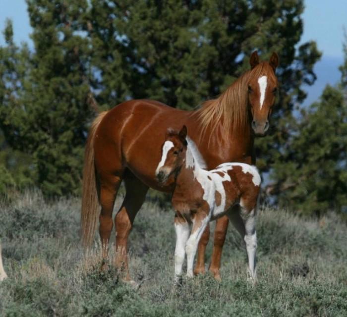 видео про белую лошадь