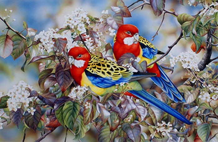 Eastern Rosellas'
