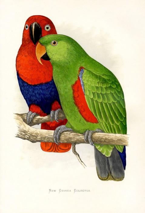"""Оригинал схемы вышивки  """"птицы. попугай """" ."""