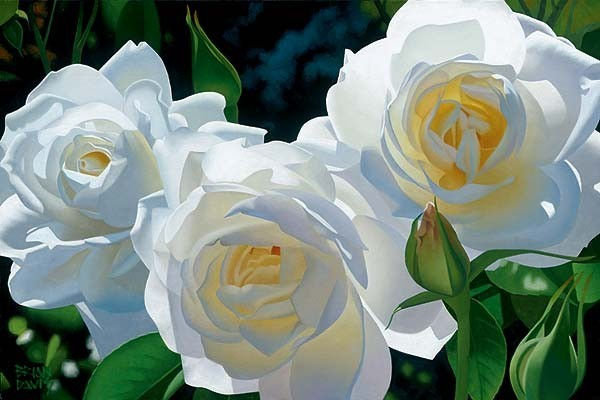 Sunny Afternoon Roses