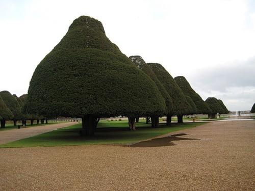 Сад дворца Хэмптон-Кор 75817