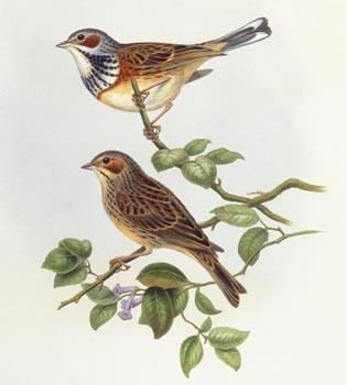 нарисованные птички картинки
