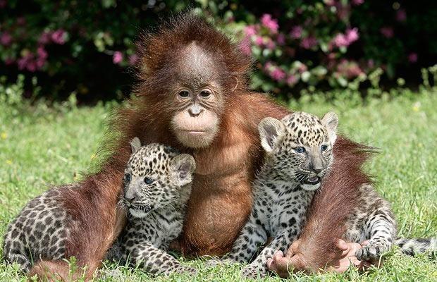 Фотографии животных.