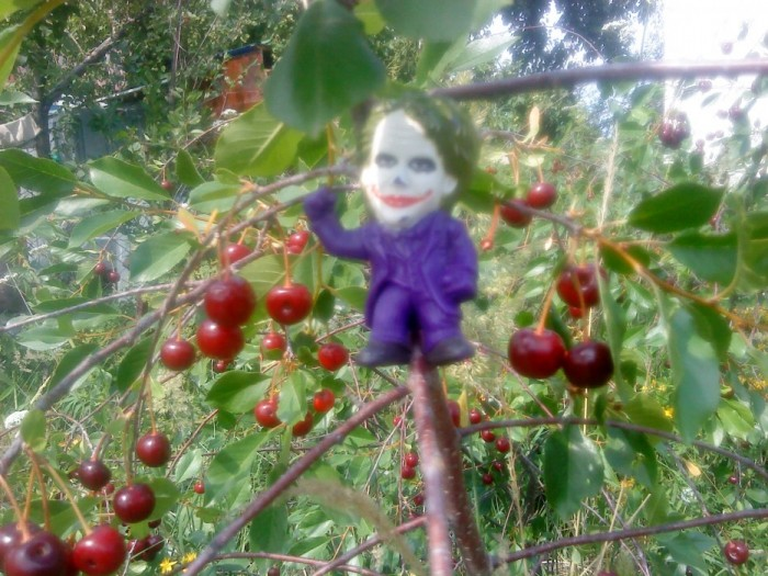 Joker-6 на вишне