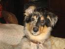 Посмотреть все фотографии серии Мой собака...)))