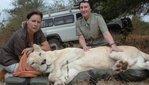 [+] Увеличить - белые львы фото белых львов - 16
