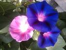 Посмотреть все фотографии серии дачные цветы