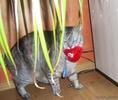 Посмотреть все фотографии серии Мой интерьерный кот...