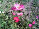 Посмотреть все фотографии серии Бабье лето