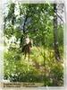 Посмотреть все фотографии серии Русская природа