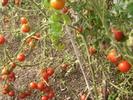 Посмотреть все фотографии серии Урожай
