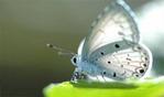 [+] Увеличить - Бабочка