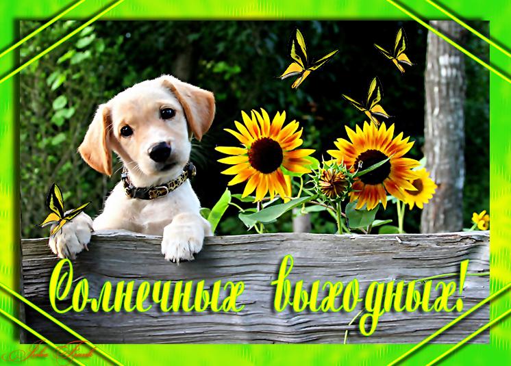http://img0.liveinternet.ru/images/foto/c/0/518/3823518/f_20599489.jpg