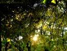 Посмотреть все фотографии серии осень ©