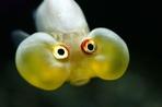Посмотреть все фотографии серии Рыбы