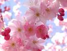 [+] Увеличить - Фотографии весенних цветов 2